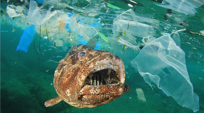マイクロプラスチック問題と海洋汚染