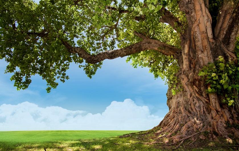 「心の木」を育てよう~東洋思想と子ども瞑想