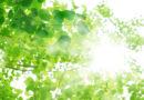 カルシウムの吸収UP!ビタミンDを多く含む食品と日光浴のポイント