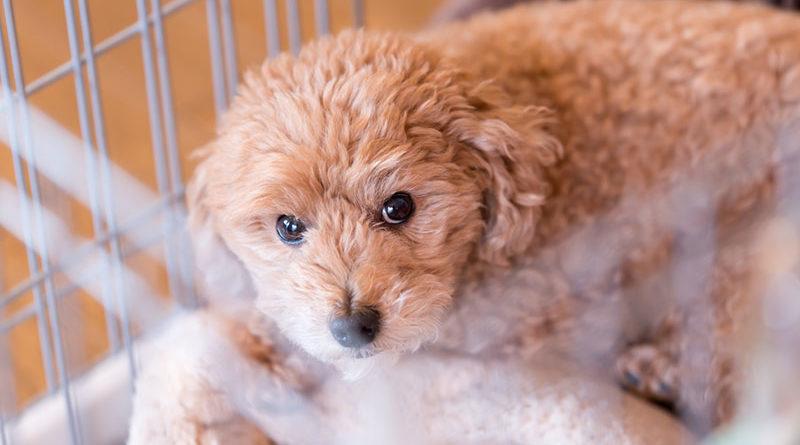ペットショップの犬