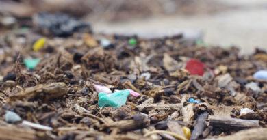 マイクロプラスチックの海への被害