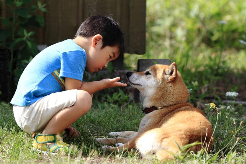 子どもが命と向き合う学校動物飼育とは