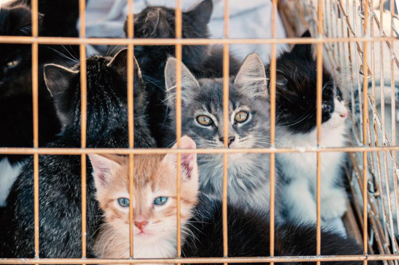動物愛護管理センター
