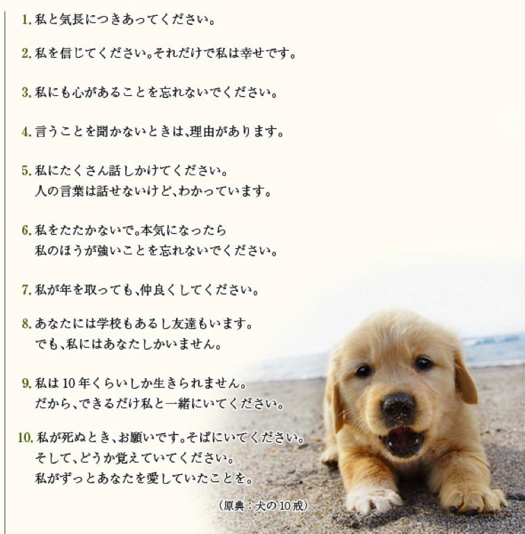 ペットから、飼い主への言葉