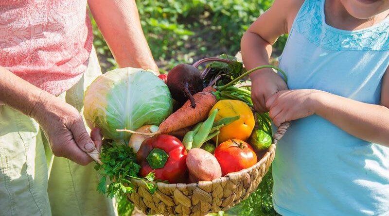 【毎週日曜日定期開催:随時参加者募集♪】遊休地をみんなで開墾&野菜を育てよう!長野の菌ちゃん先生に学ぶ『心の木マザーズファーム in 長野』スタート